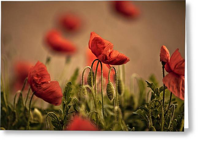 Summer Poppy Greeting Card by Nailia Schwarz