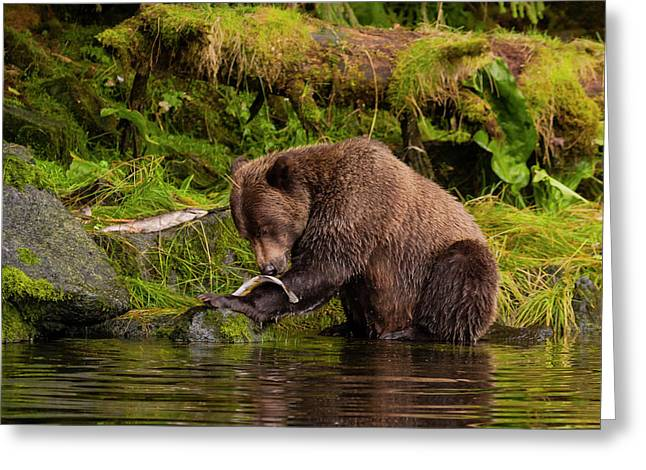 Usa, Alaska, Tongass National Forest Greeting Card by Jaynes Gallery