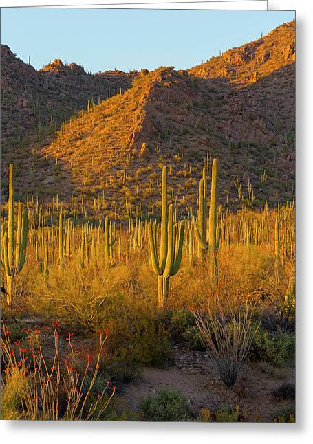 Usa, Arizona, Tucson Greeting Card