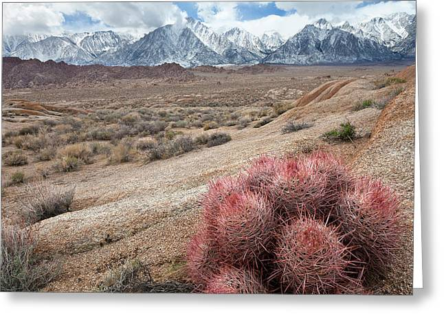 Usa, California, Lone Pine Greeting Card by Jaynes Gallery