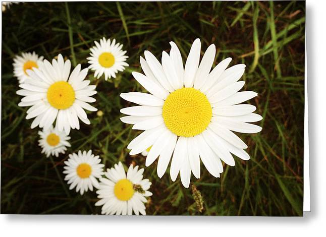 Wild Daisies Greeting Card by Les Cunliffe