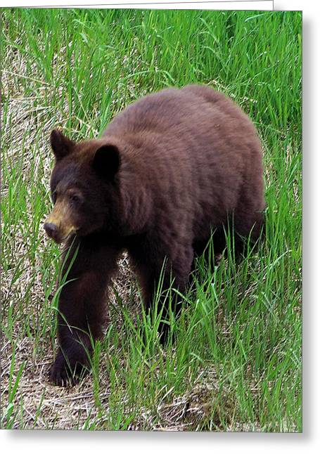 100414 Black Bear Greeting Card