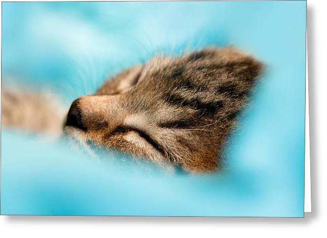 100pct  Innocence  Baby Kitten Greeting Card by Roeselien Raimond