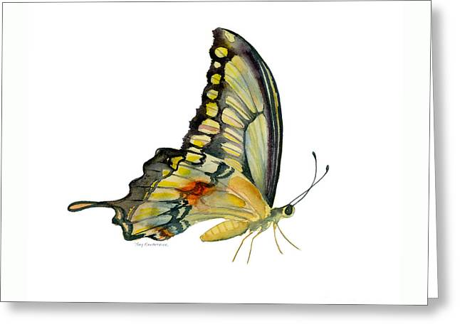 104 Perched Swallowtail Butterfly Greeting Card by Amy Kirkpatrick