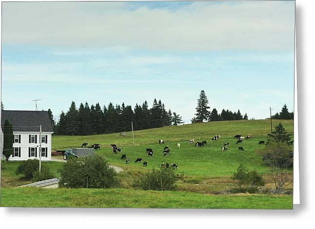 Daily Life On An Organic Dairy Farm Greeting Card