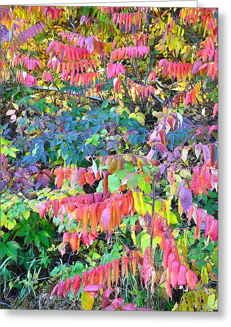 Devil's Lake Fall Color Greeting Card