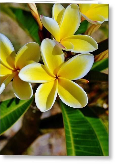 Frangipani Blossom Greeting Card by Werner Lehmann