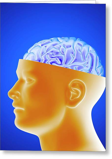 Human Brain Greeting Card by Alfred Pasieka/science Photo Library