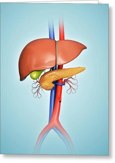 Human Internal Organs Greeting Card
