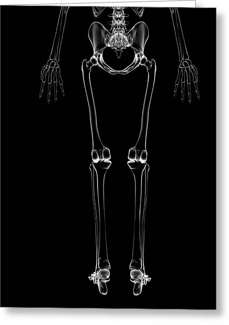 Human Leg Bones Greeting Card