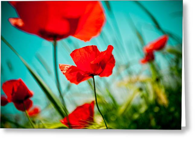Poppy Field And Sky Greeting Card