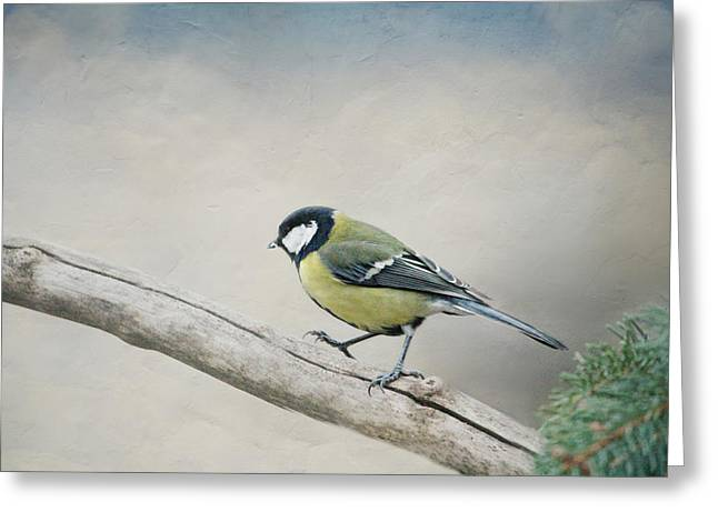 tit Greeting Card by Heike Hultsch