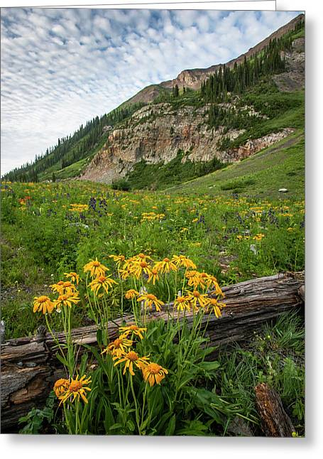 Usa, Colorado, Crested Butte Greeting Card by Jaynes Gallery