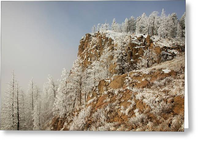 Usa, Colorado, Pike National Forest Greeting Card by Jaynes Gallery