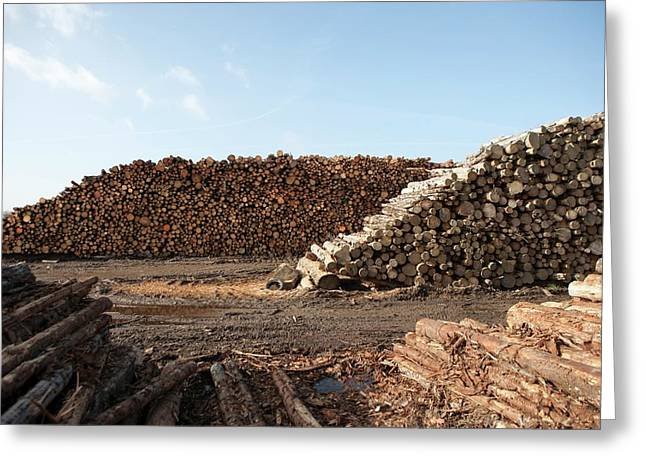 Wood Chip Fuel Production Greeting Card by Lewis Houghton/science Photo Library