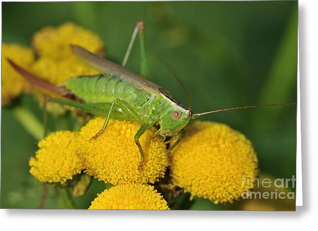 110221p244 Greeting Card by Arterra Picture Library