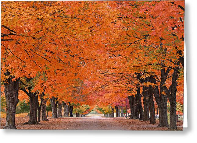 1110-7483 Maplewood Cemetery At Harrision Arkansas Greeting Card by Randy Forrester
