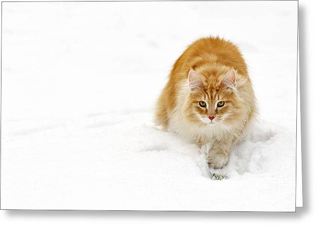 111230p310 Greeting Card by Arterra Picture Library