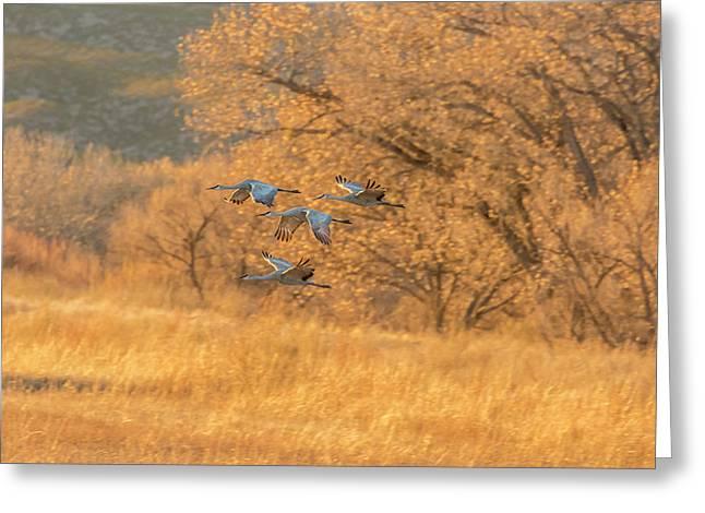 Usa, New Mexico, Bosque Del Apache Greeting Card