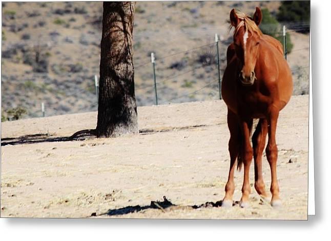 113 Greeting Card by Wynema Ranch