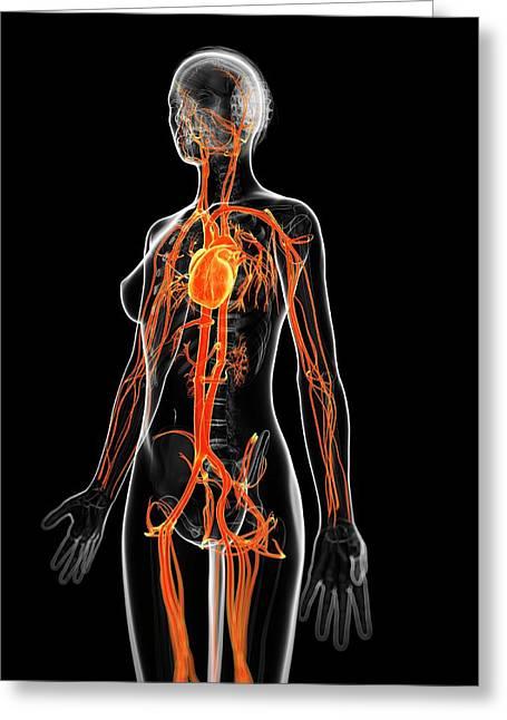 Human Vascular System Greeting Card by Sebastian Kaulitzki