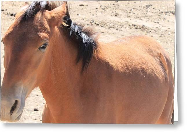 115 Greeting Card by Wynema Ranch
