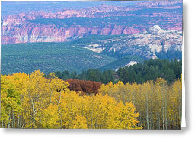 Aspen Trees In A Forest, Boulder Greeting Card by Panoramic Images