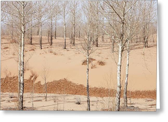 Drought Greeting Card by Ashley Cooper