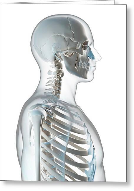 Human Skull And Neck Greeting Card by Sebastian Kaulitzki