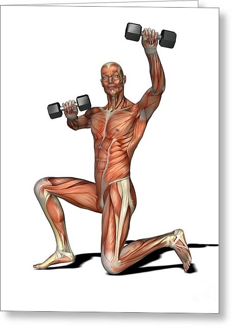 Male Muscles, Artwork Greeting Card by Friedrich Saurer