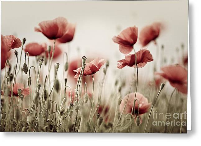 Poppy Dream Greeting Card by Nailia Schwarz
