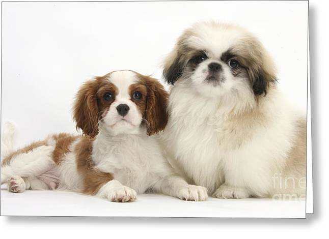 Puppies Greeting Card by Mark Taylor