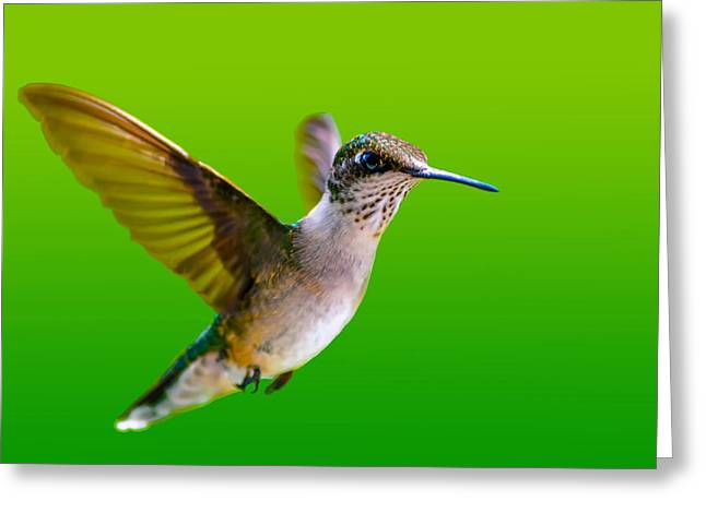Ruby Throated Hummingbird Greeting Card by Brian Stevens