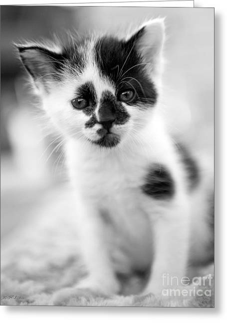 Spotted Black And White Kitten Greeting Card by Iris Richardson