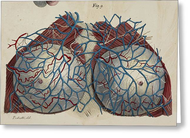 Anatomical Drawing Greeting Card by British Library
