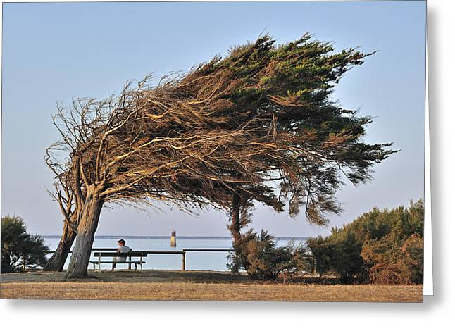 Greeting Card featuring the photograph 120920p152 by Arterra Picture Library