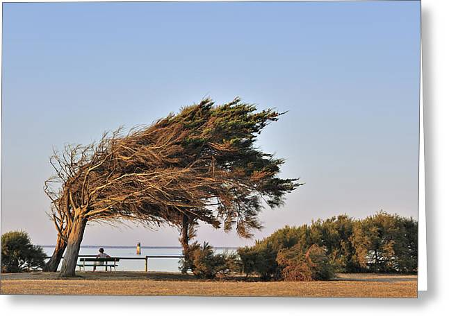 Greeting Card featuring the photograph 120920p153 by Arterra Picture Library