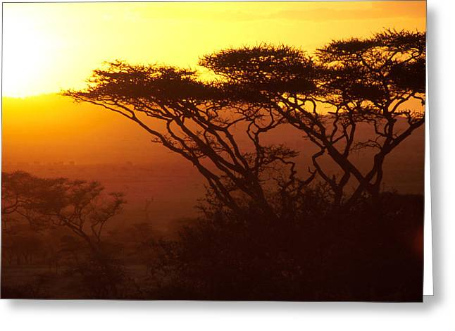 Untitled Greeting Card by Vw Pics