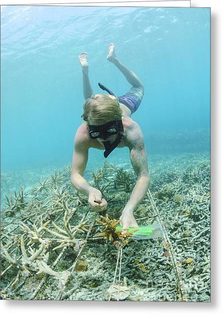 Biorock Reef Restoration, Indonesia Greeting Card by Matthew Oldfield