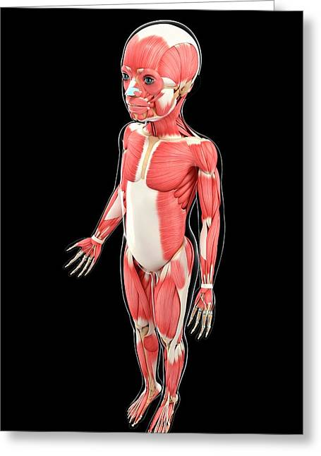 Child's Muscular System Greeting Card by Pixologicstudio