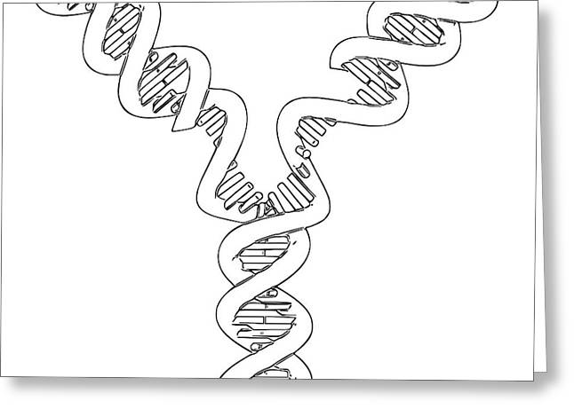 Dna Replication Greeting Card by Russell Kightley
