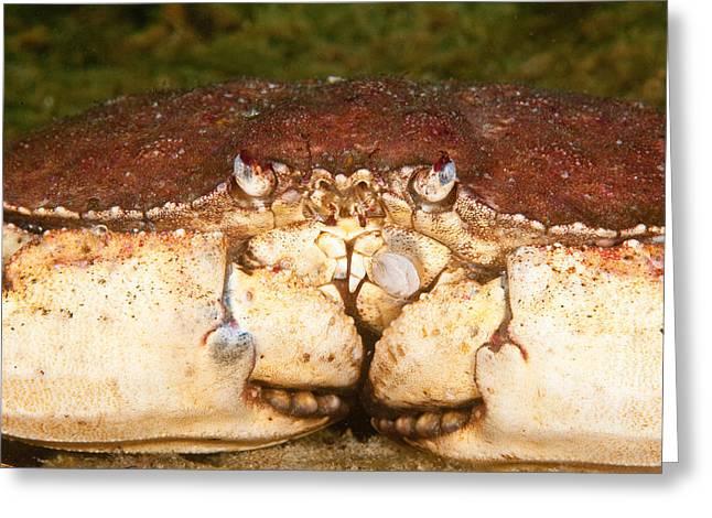 Jonah Crab Greeting Card