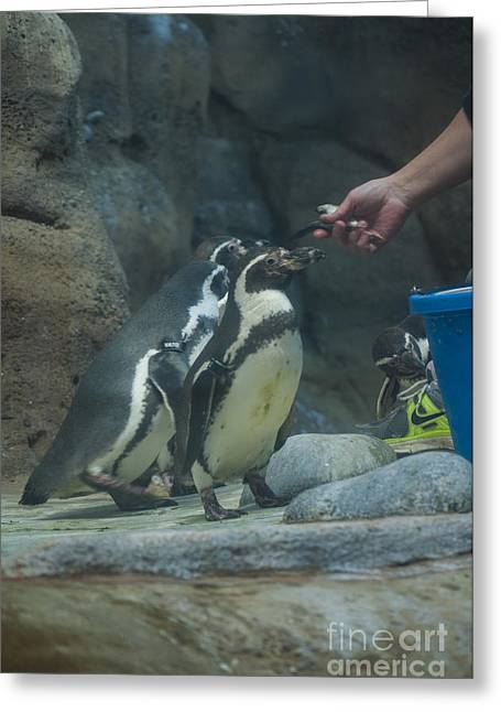 Penguin Greeting Card by Mandy Judson