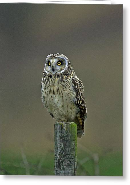 Short Eared Owl Greeting Card by Paul Scoullar