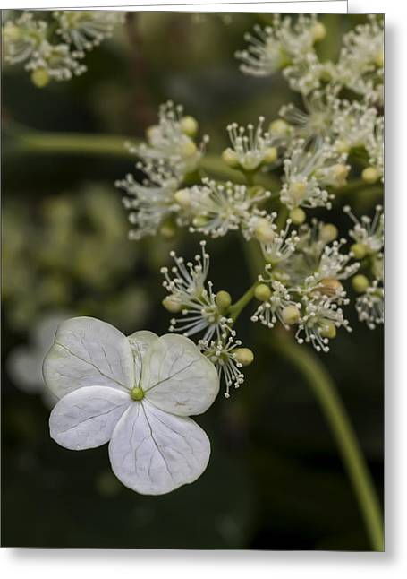 Spring Flowers Greeting Card by Robert Ullmann