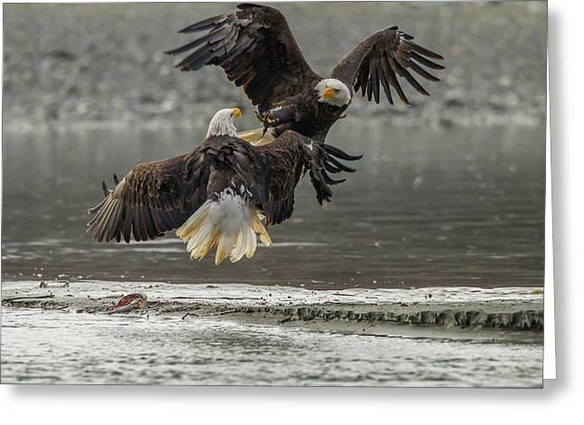 Usa, Alaska, Chilkat Bald Eagle Preserve Greeting Card
