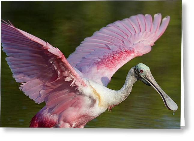 Usa, Florida, Everglades National Park Greeting Card