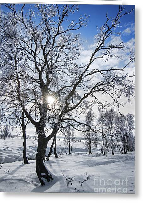 Greeting Card featuring the photograph 130201p341 by Arterra Picture Library