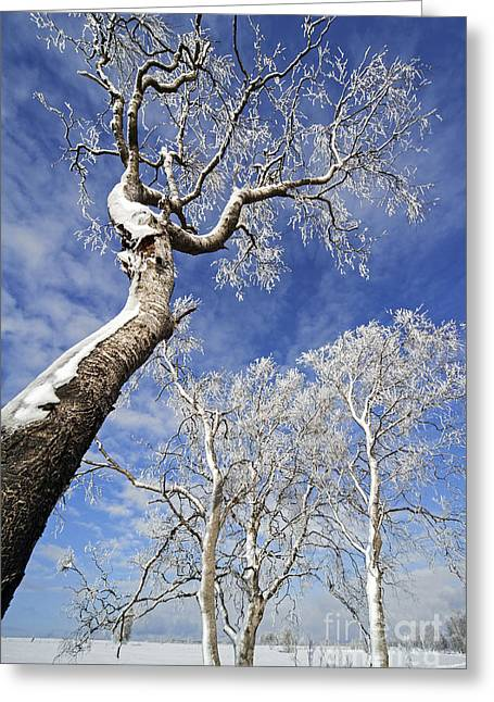 Greeting Card featuring the photograph 130201p343 by Arterra Picture Library