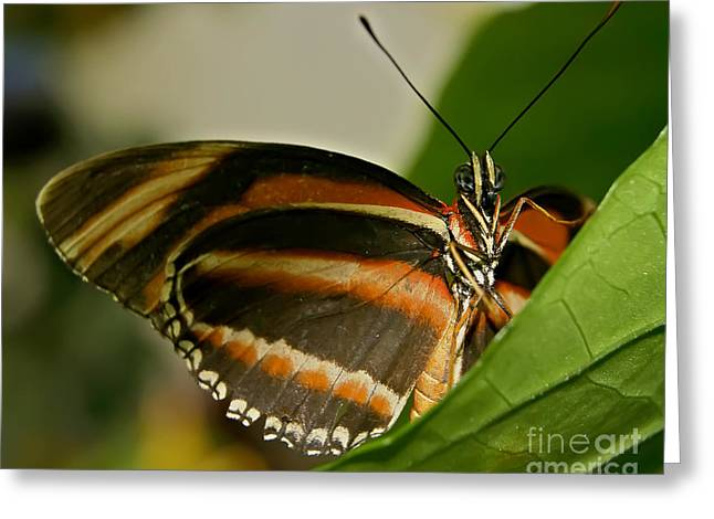 Greeting Card featuring the photograph Butterfly by Olga Hamilton